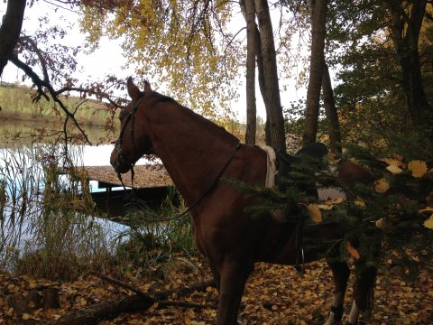 Herbst am Amselhof 2013